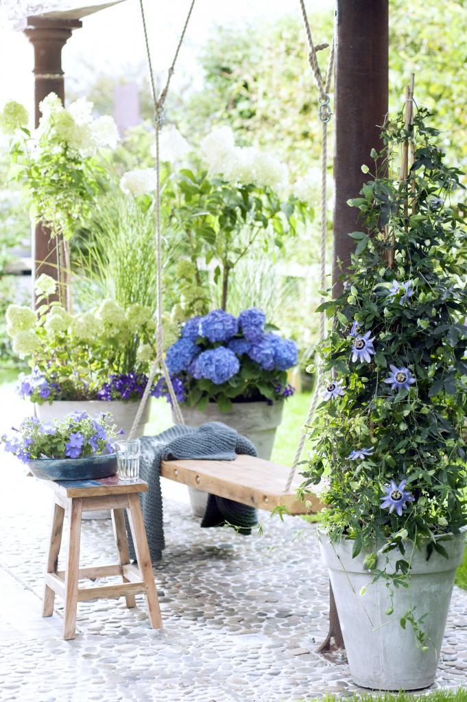 passiflora_hortensia_petunia