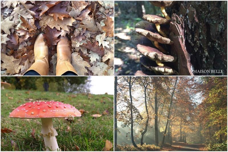 herfst-natuur-maisonbelle-woonblog