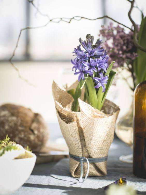bloem-bol-hyacint-maisonbelle