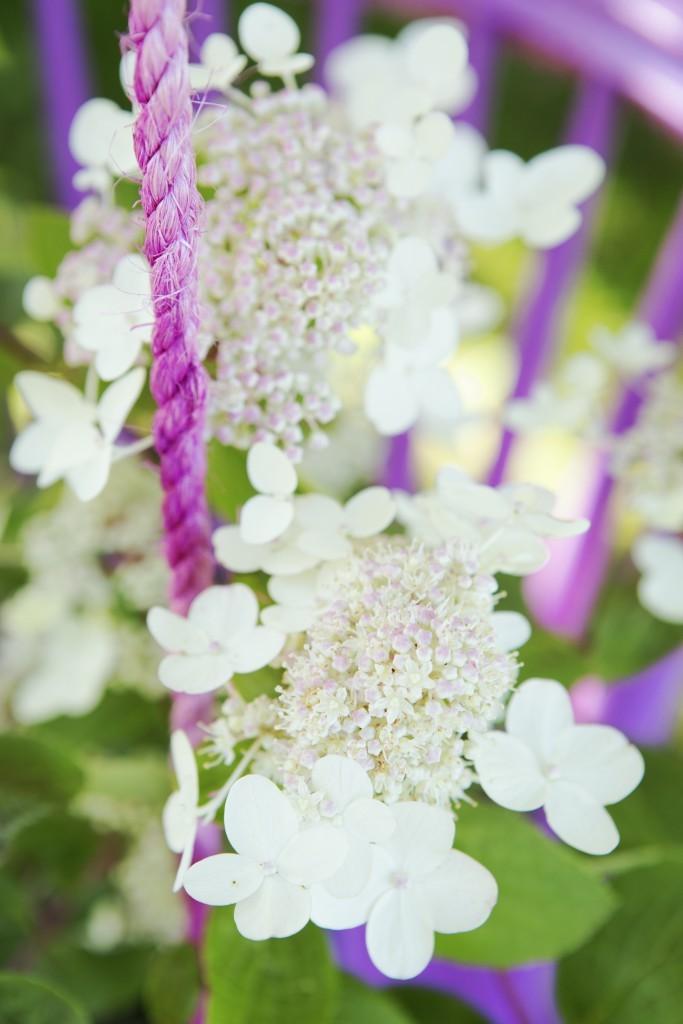 maisonbelle-pluimhortensia-1-tuinblog