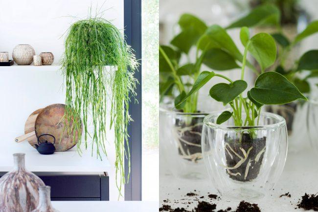 maisonbelle-kamerplanten-interieurblog