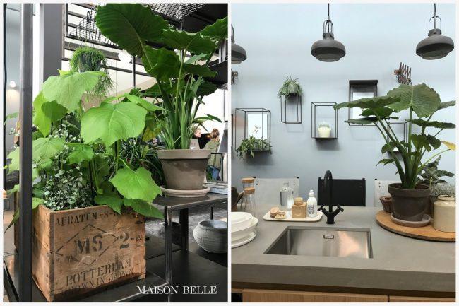 kamerplanten interieurtrend