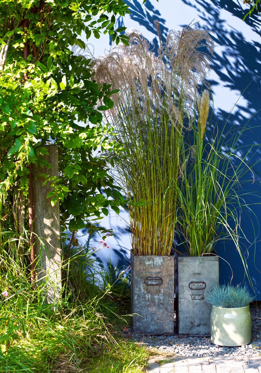 siergras industriele bak tuin