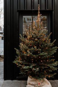 kerstboom uitzoeken tips