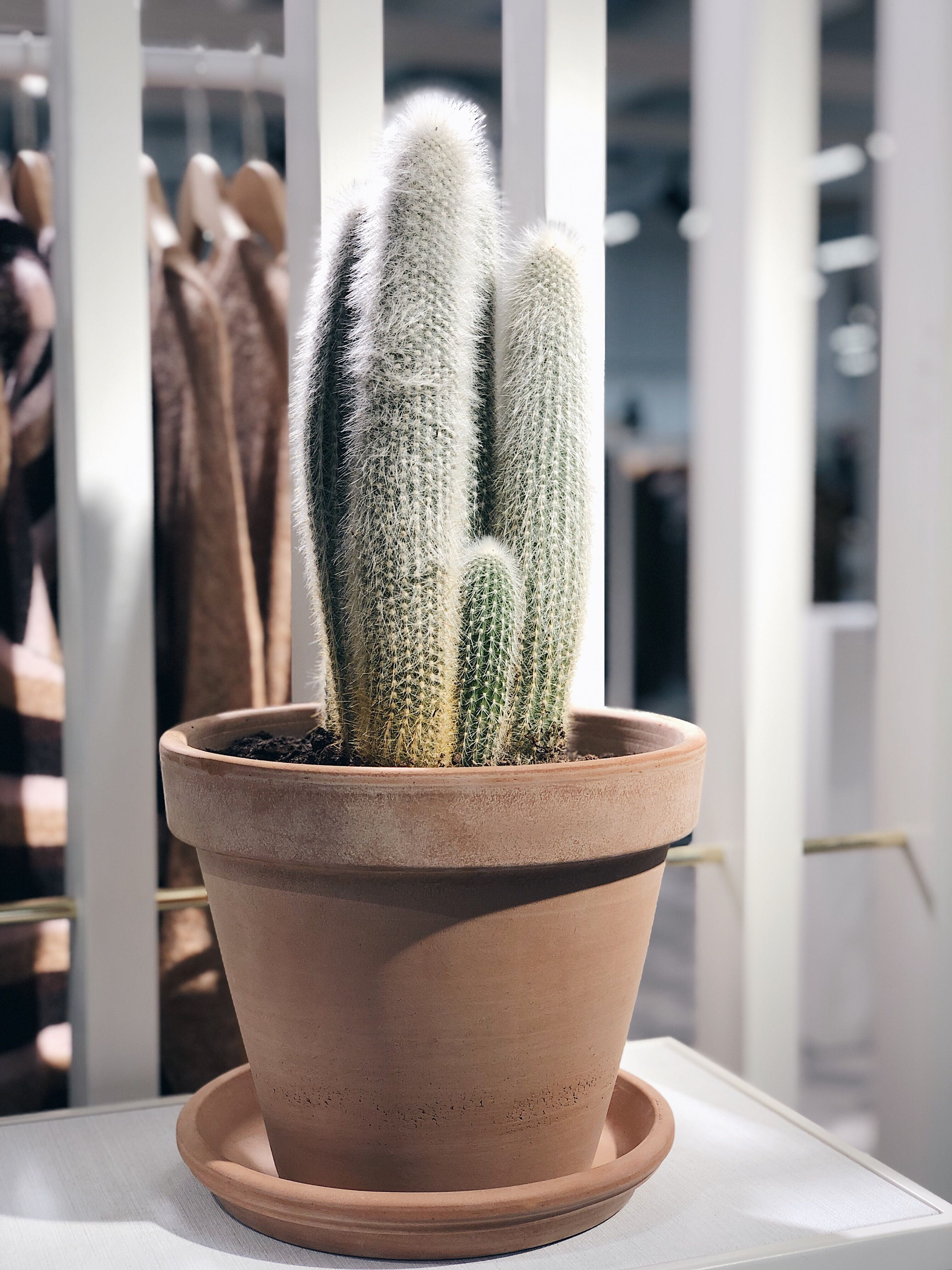cactus interieurtrend