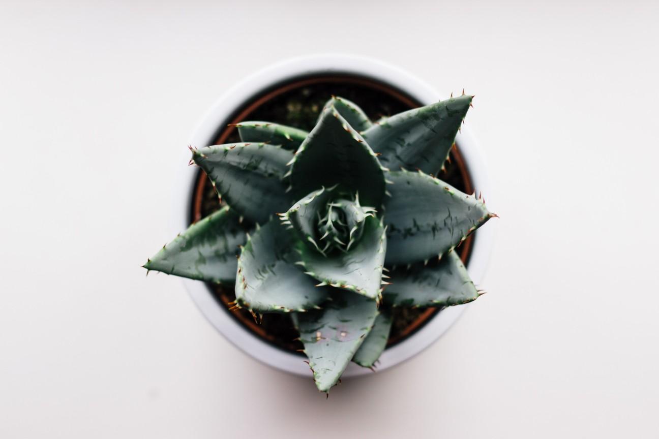 aloe plant blog