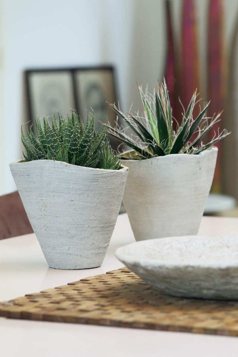 aloe plant styling