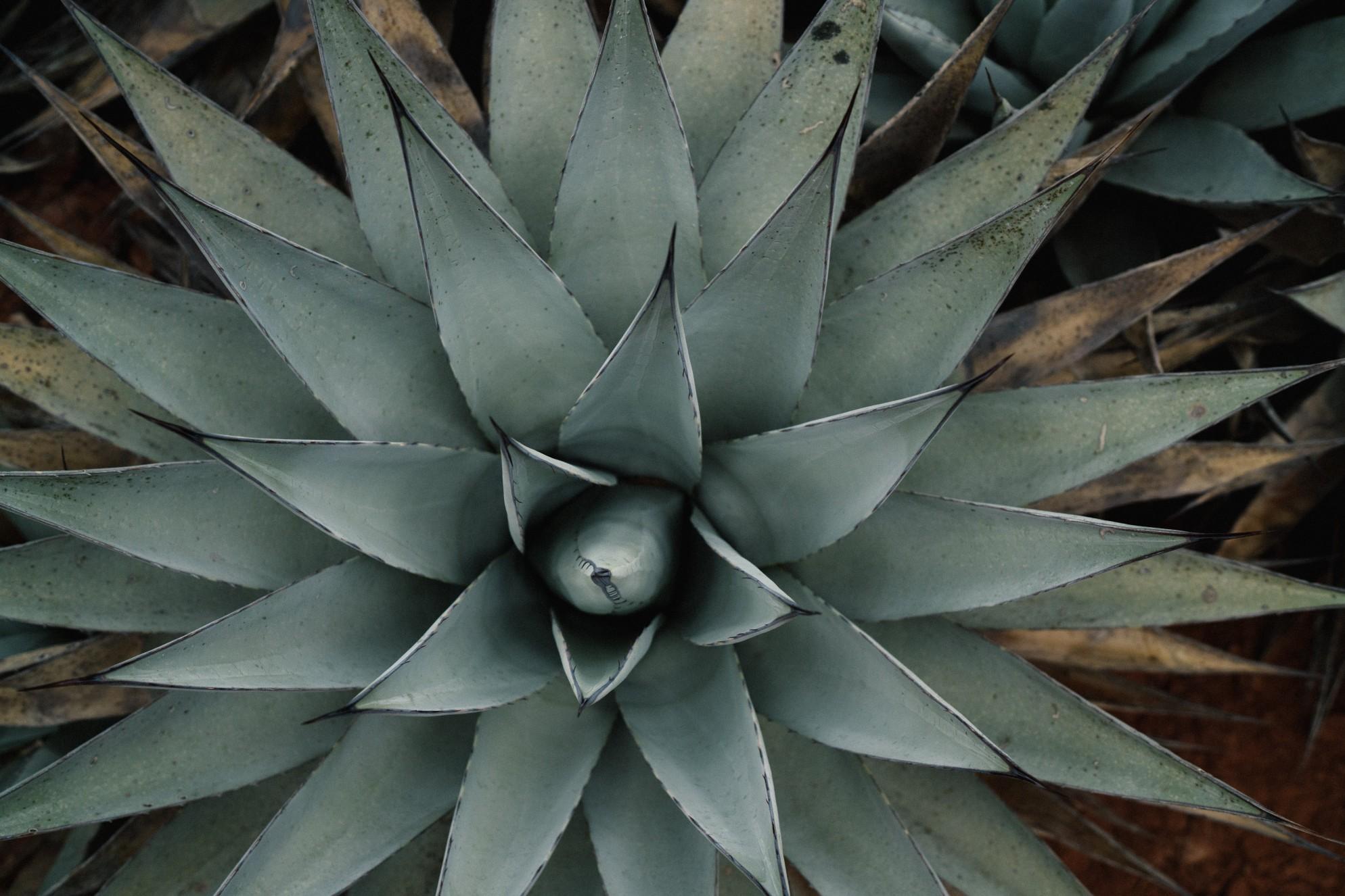 aloe plant woonblog