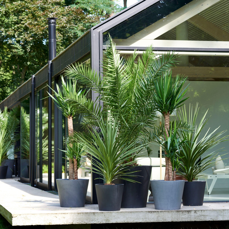 palmen interieur