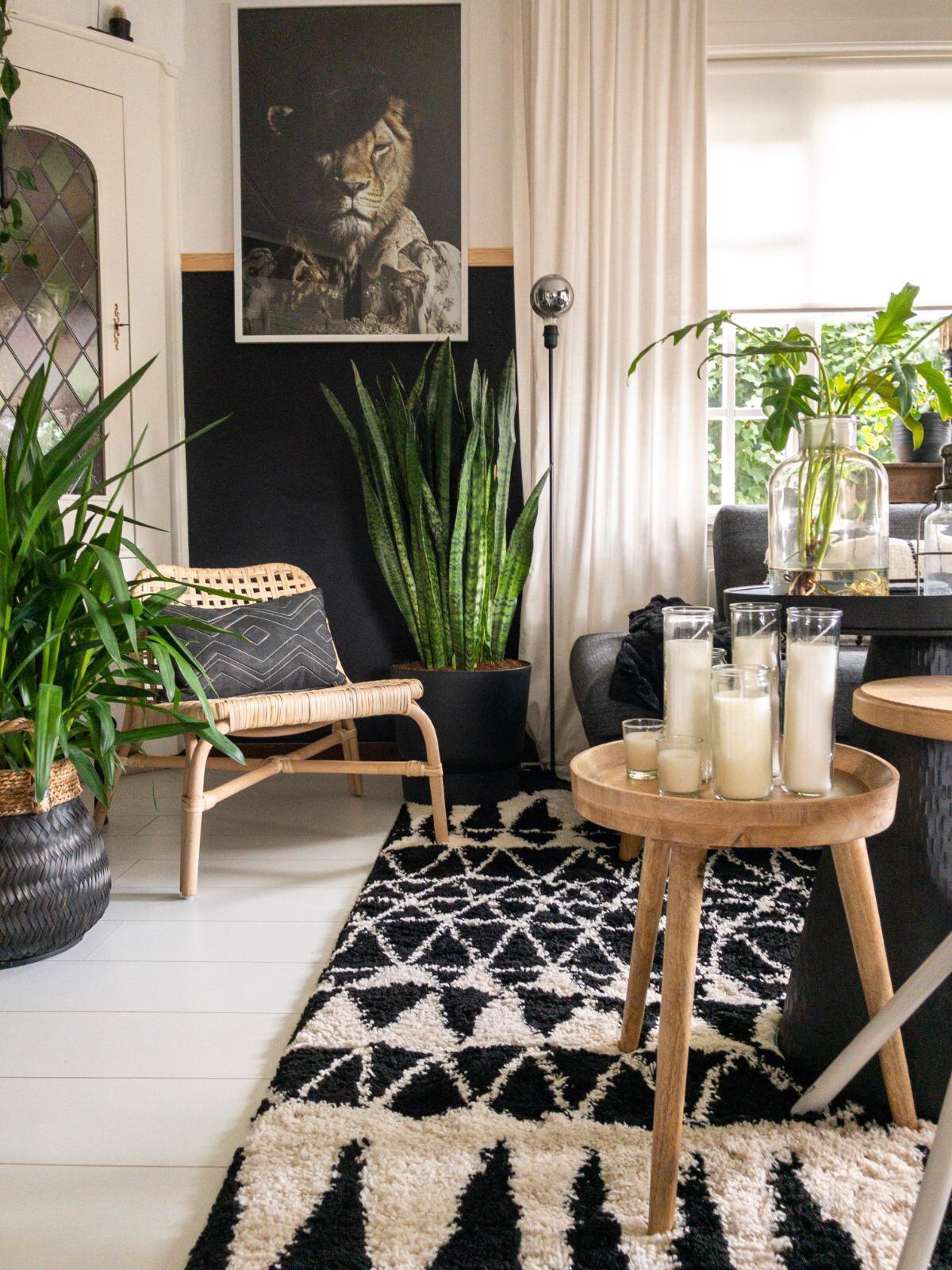 grote kamerplant kopen