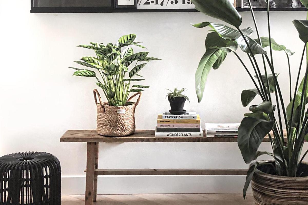 interieurstyling kamerplanten
