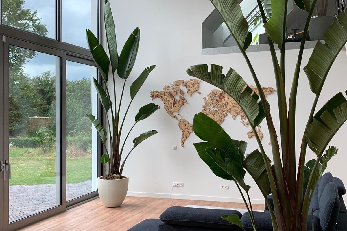 strelizia plant