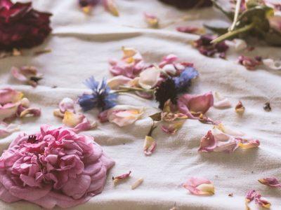 droogbloemen bloemen drogen